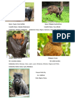 Endemic Mammals in the Philippines