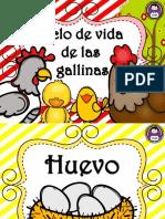 ciclo-de-vida-de-la-gallina.pdf