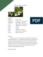 Brugmansia suaveolens.docx