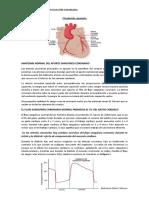 Circulación-coronaria