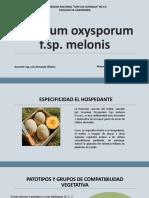 Fusarium Oxysporum f.sp. Melonis