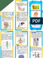 El-Sistema-Nervioso-Triptico.doc