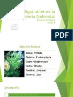 Algas Utiles en La Ingenieria Ambiental
