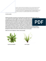 Plante de gazon acvatice.docx