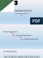 Actinomicetales