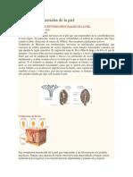 Receptores Sensoriales de La Piel