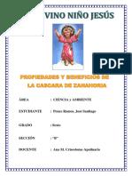 proyecto zanahoria