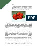 Características de La Frutilla