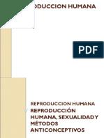 reproduccion-humana.ppt