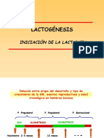 4- Lactogénesis 2015[1]