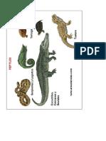 Reptiles Dibujos