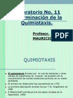 Laboratorio No. 11- Quimiotaxis-2016 (2)
