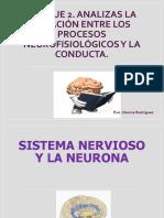 Neuronas y Cerebro (1)