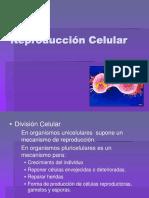 Division Celula