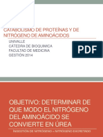 catabolismo de protenas y de nitrgeno de aminocidos