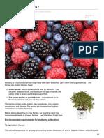 Romanticflowershop.website-How to Grow Berries
