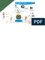 DocGo.org-Mapa Mental Direito Constitucional