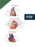 Anatomi Gambar Sistem Peredaran Darah Cardiovaskuler