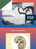 FUERZAS TENSIONALES