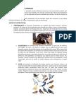 Clasificación de Los Animales - Otilia