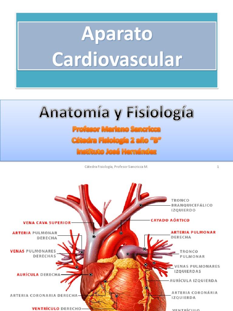 Anatomía y Fisiologia Del AP. Cardio Vascular