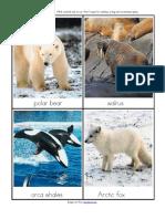 arctic_animals_flashcards__1_.pdf