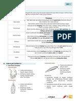 Biologi Chordata.pdf
