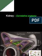 02. Renal Tubular Anatomy