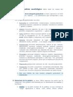4. Análisis morfológico.doc