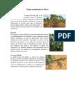 Planta Medicinales de África