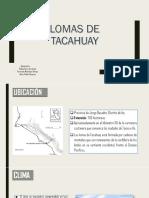 LOMAS DE TACAHUAY.pptx
