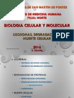 6.BCM-16-CHI-06-LISOSOMASDEGRADACIONMUERTE-HELI