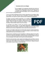 Ecosistema de Los Murciélagos