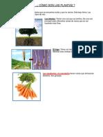 Guia Fotosintesis y Polinizacion