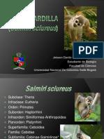 Mono Ardilla, Historia evolutiva