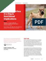 dog diarhea