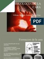 Embriologia de La Cara