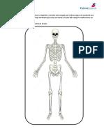 Esqueleto, Articulaciones y Músculos