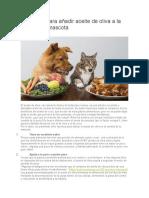 8 Razones Para Añadir Aceite de Oliva a La Dieta de Tu Mascota
