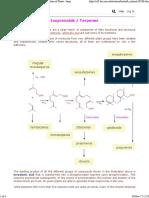 Isoprenoids Terpenes