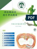 【04】神经解剖学【脊髓内部结构】图片库