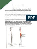 3er Parte Osteología y Artrología Miembro Superior
