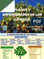 01. Plagas y Enfermedades de Los Cítricos...