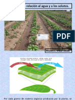 Agua y Su Movimiento en Las Plantas Sem 02