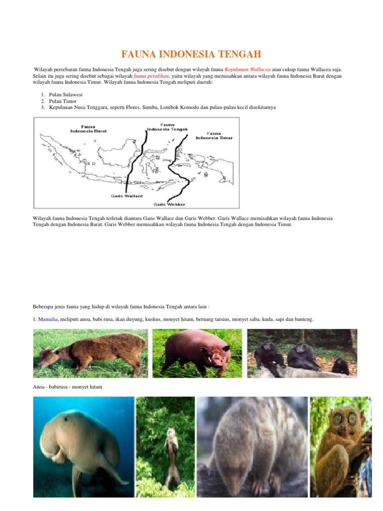 5600 Gambar Fauna Di Wilayah Paleartik Terbaru