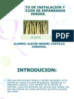 Presentacion de Esparrago Verde- Alexis.
