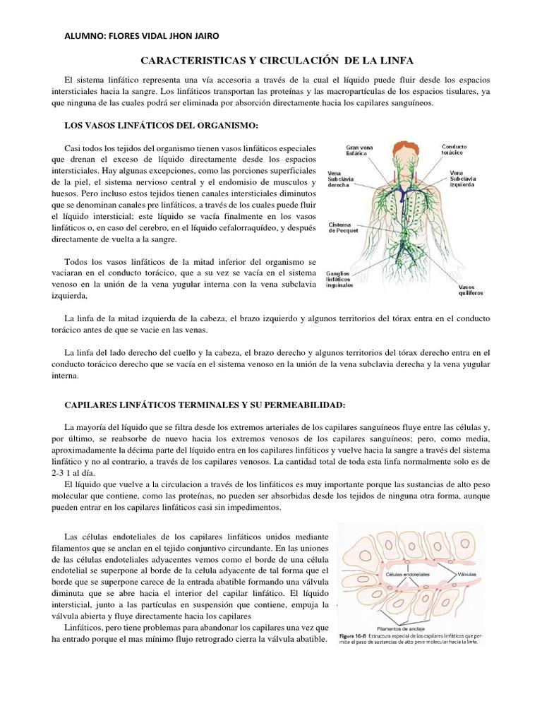 CARACTERISTICAS Y CIRCULACION DE LA LINFA.docx