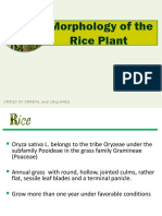 Rice Production