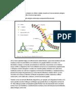 Inmunohistoquimica tiroides estudiar