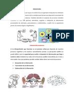 Funciones auditivas en el proceso lingüístico